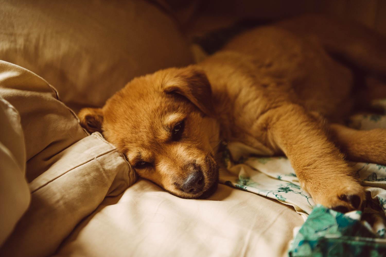 My lucky little fox... asleepin my bed…