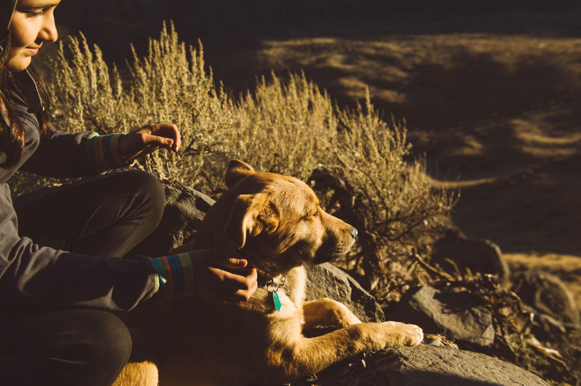 Sun gazing dog...