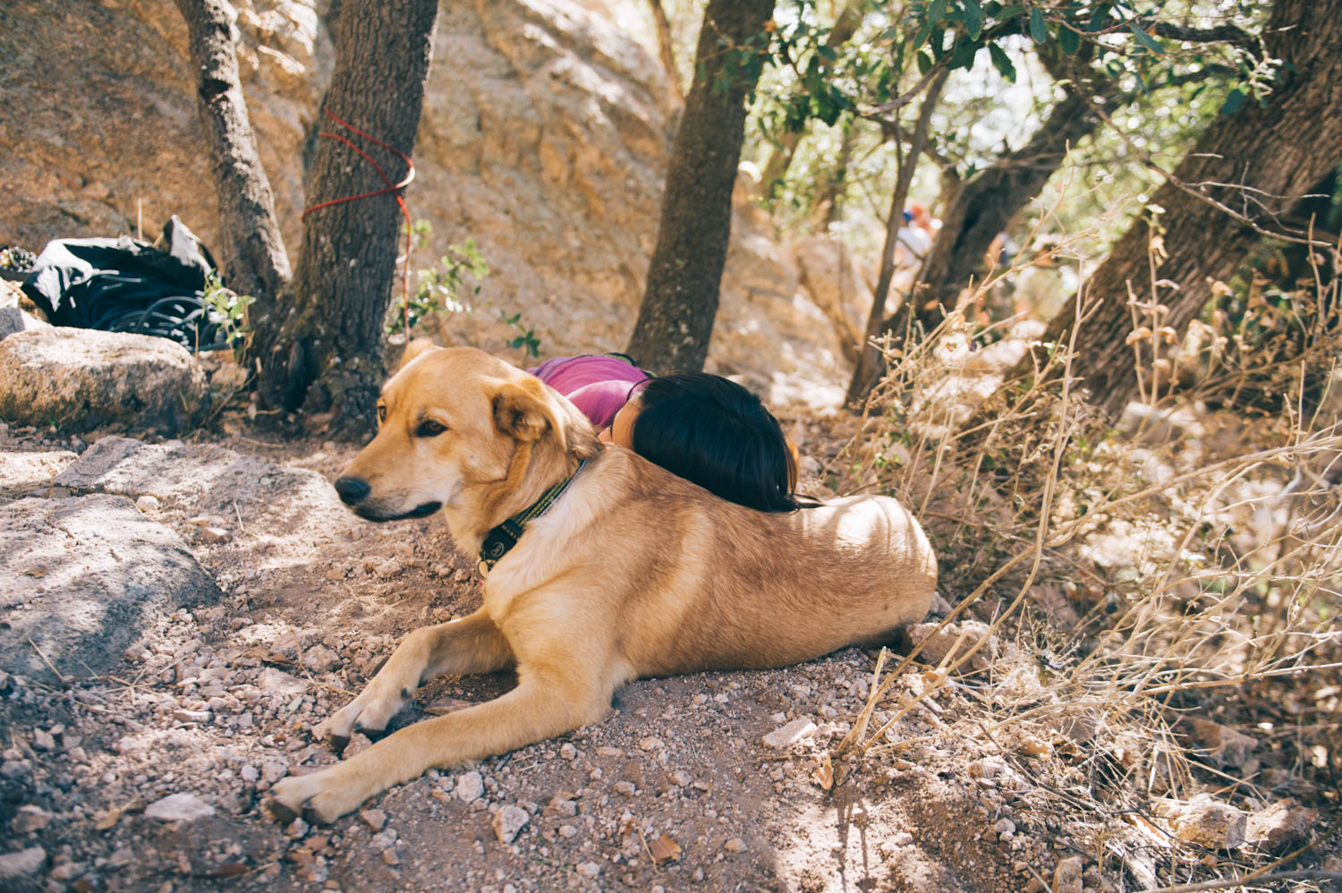 Crag dogs are perfect for rests between climbs.