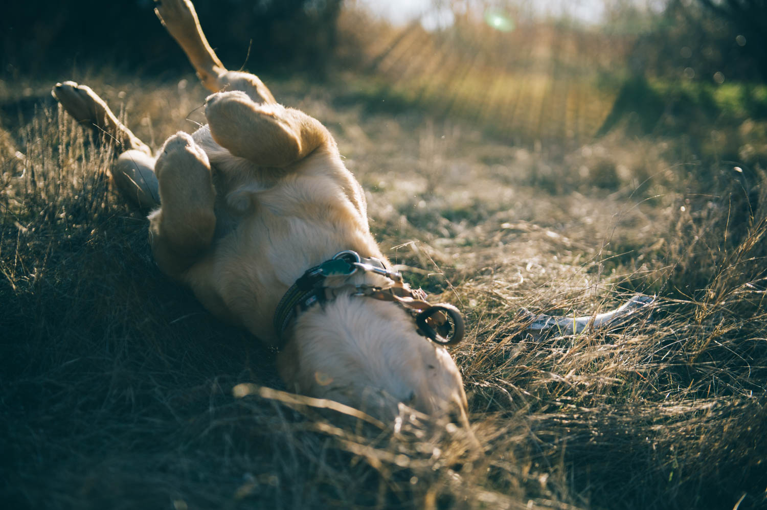 Two of your favorite things: finding bones and rolling in the grass.