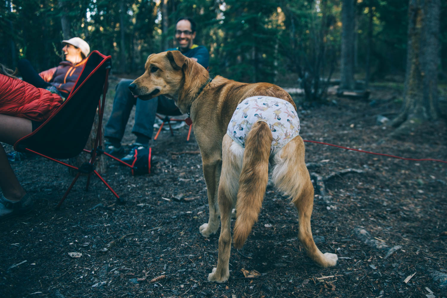 That time we made you wear underwear to keep you from licking your stitches...