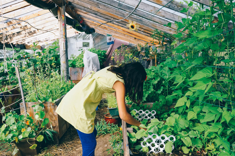 Maryne's greenhouse