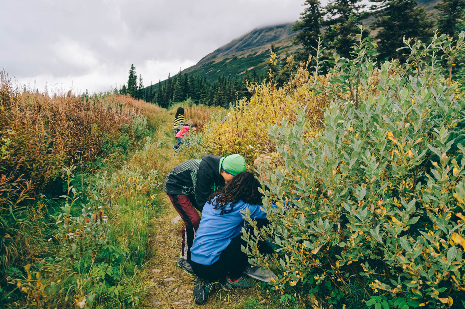 Picking blueberries in Fraser, BC (45 min from Carcross towards Alaska).