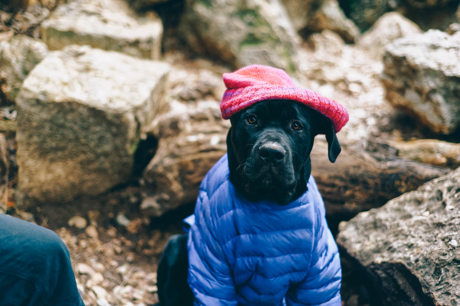 Someone was cold and wore a Patagonia jacket while we climbed.