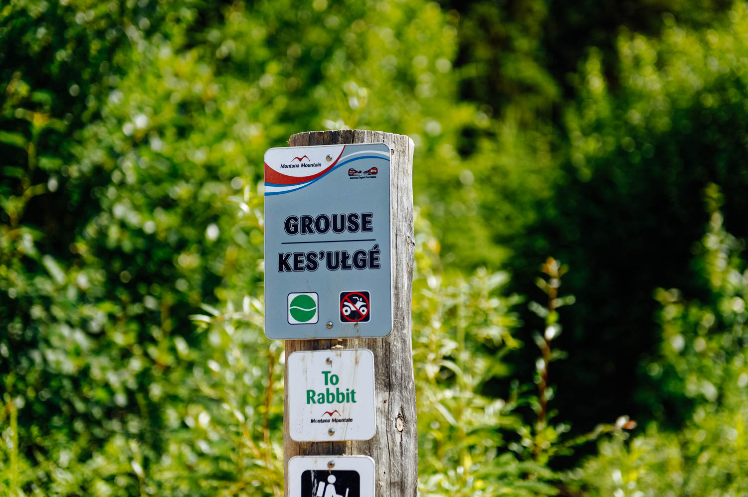 I love that all the trail signs are in their native language too (yes, that's the least. Montana Mountain is the Carcross/Tagish First Nation sacred mountain).