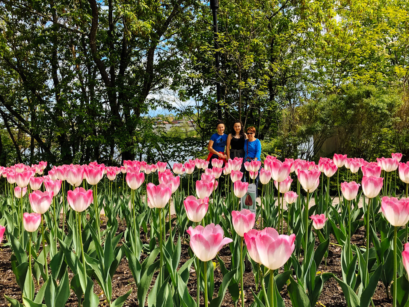 In the tulips with Mamie. Photo by Paul Brouillard.