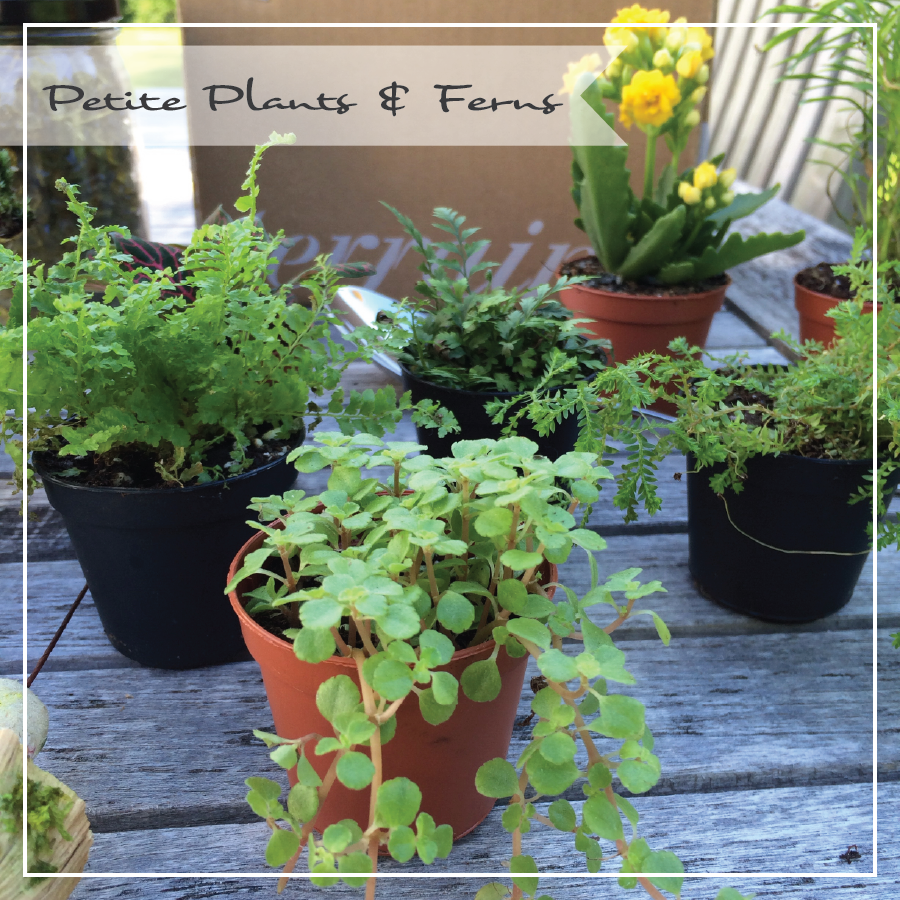 petite-plants-and-ferns-for-blog.png