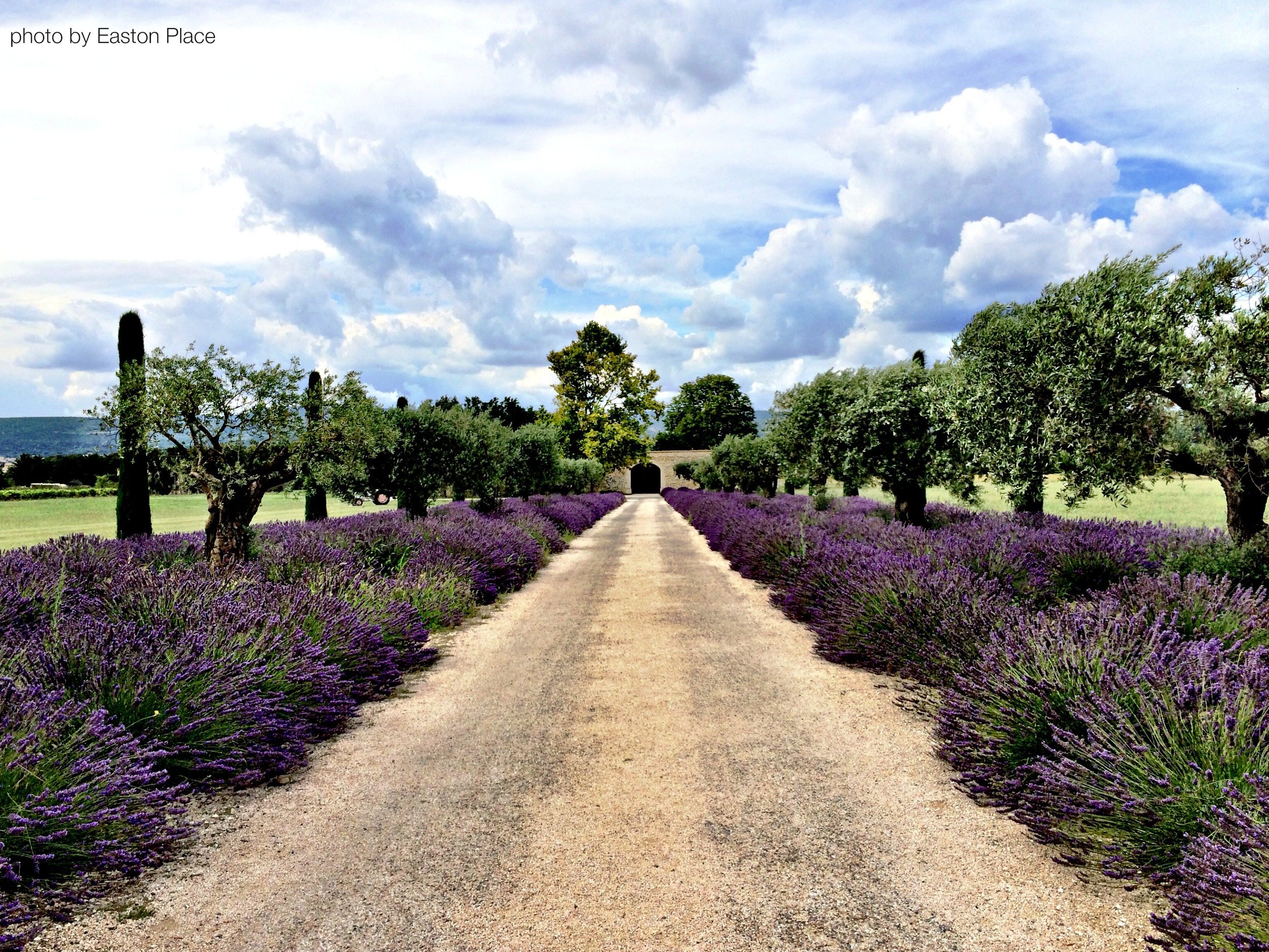 Lavender borders to a private home in Provence