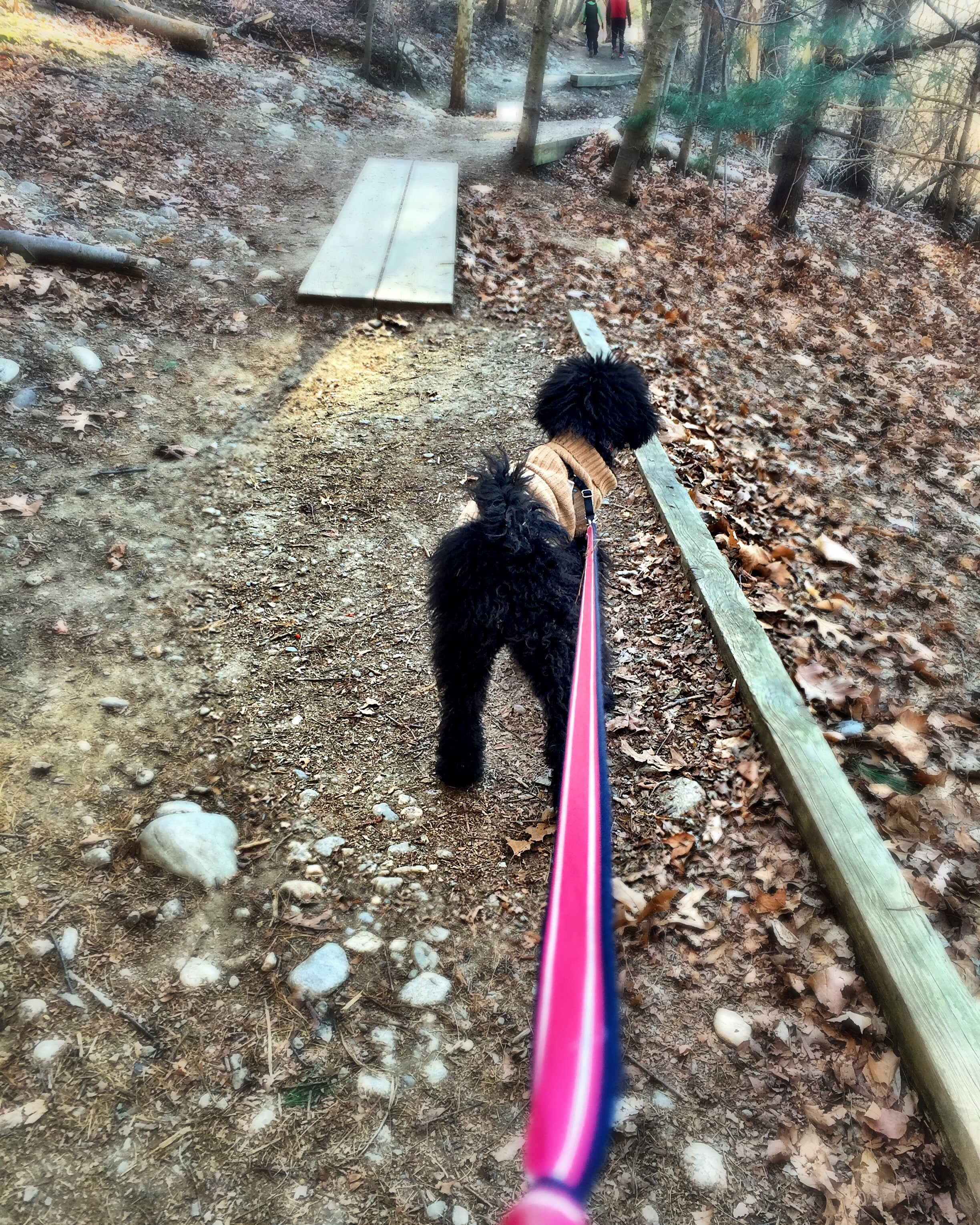 Mild winter temperatures makes taking a hike with Molly Mousse much easier!