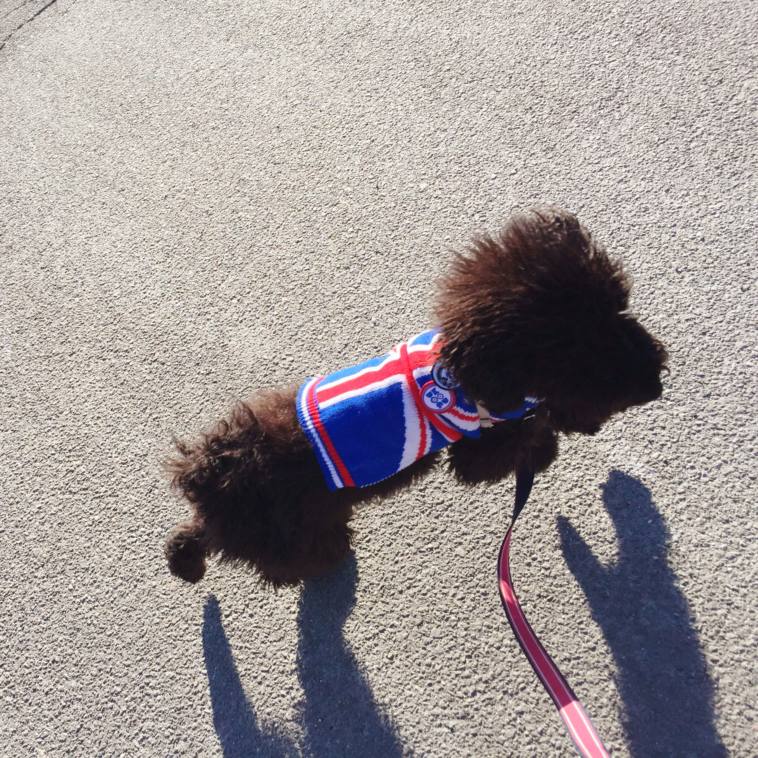 Molly Mousse Union Jack Sweater.jpeg
