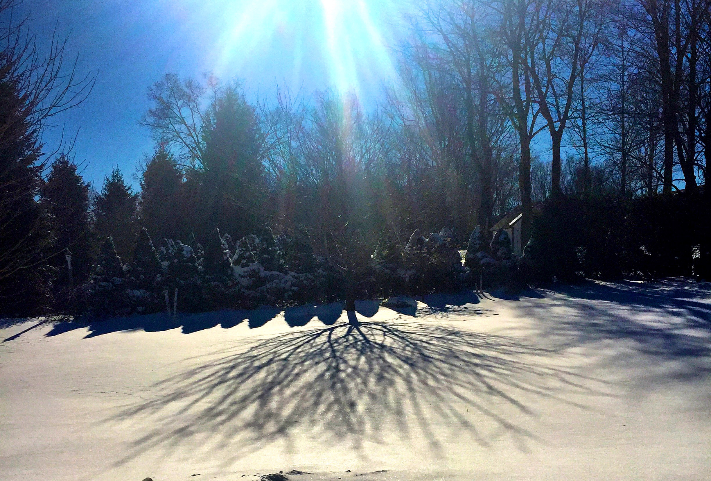 Winter finally arrived! I love the way the shadows move across the snowy backdrop in the garden.