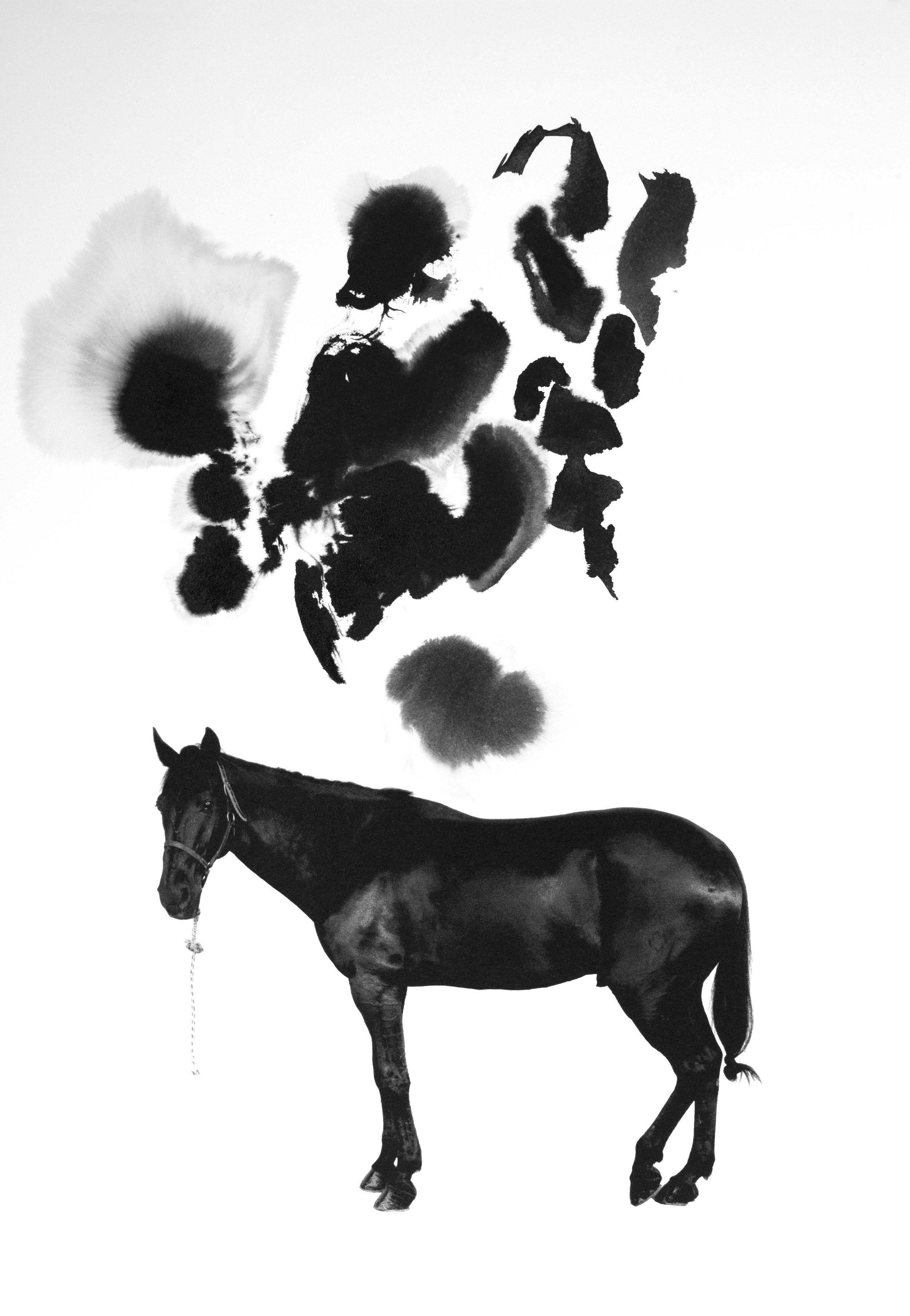 Noir 14
