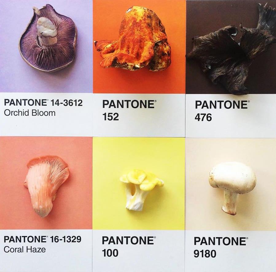 Mushroom Pantone, Additional Image.jpeg