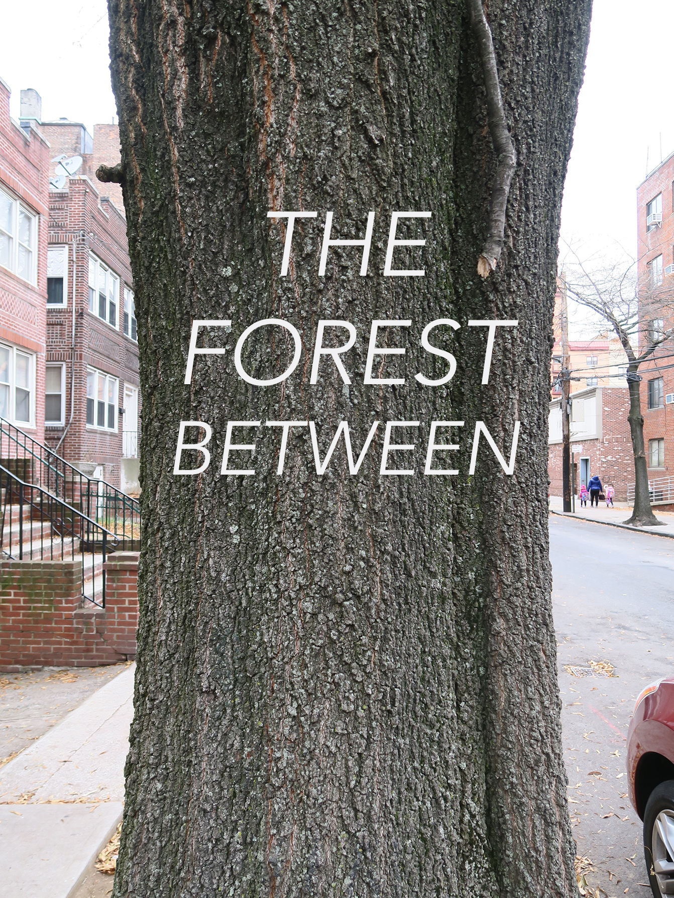 07 The Forest Between.jpg