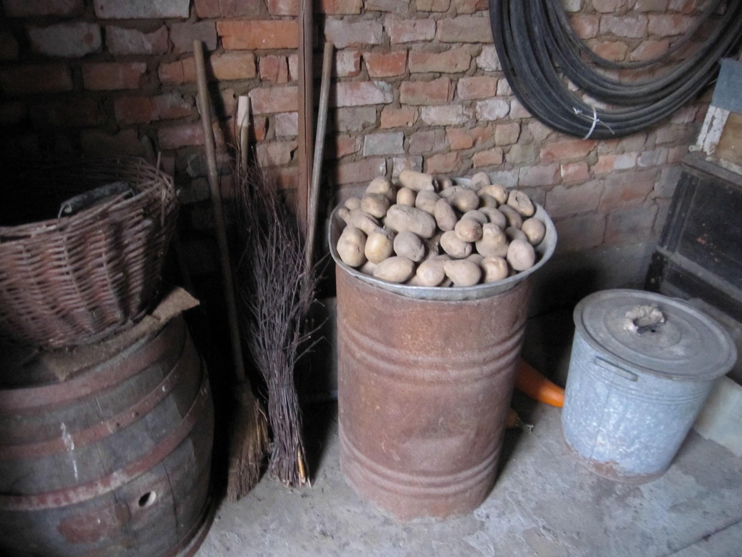 GIDEST krumpli-1.jpg
