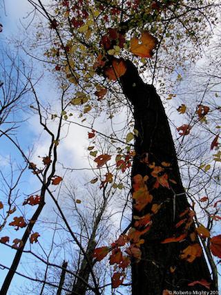 31_TMC_Stalwart_copyright2010_www.robertomighty_sm copy.jpg