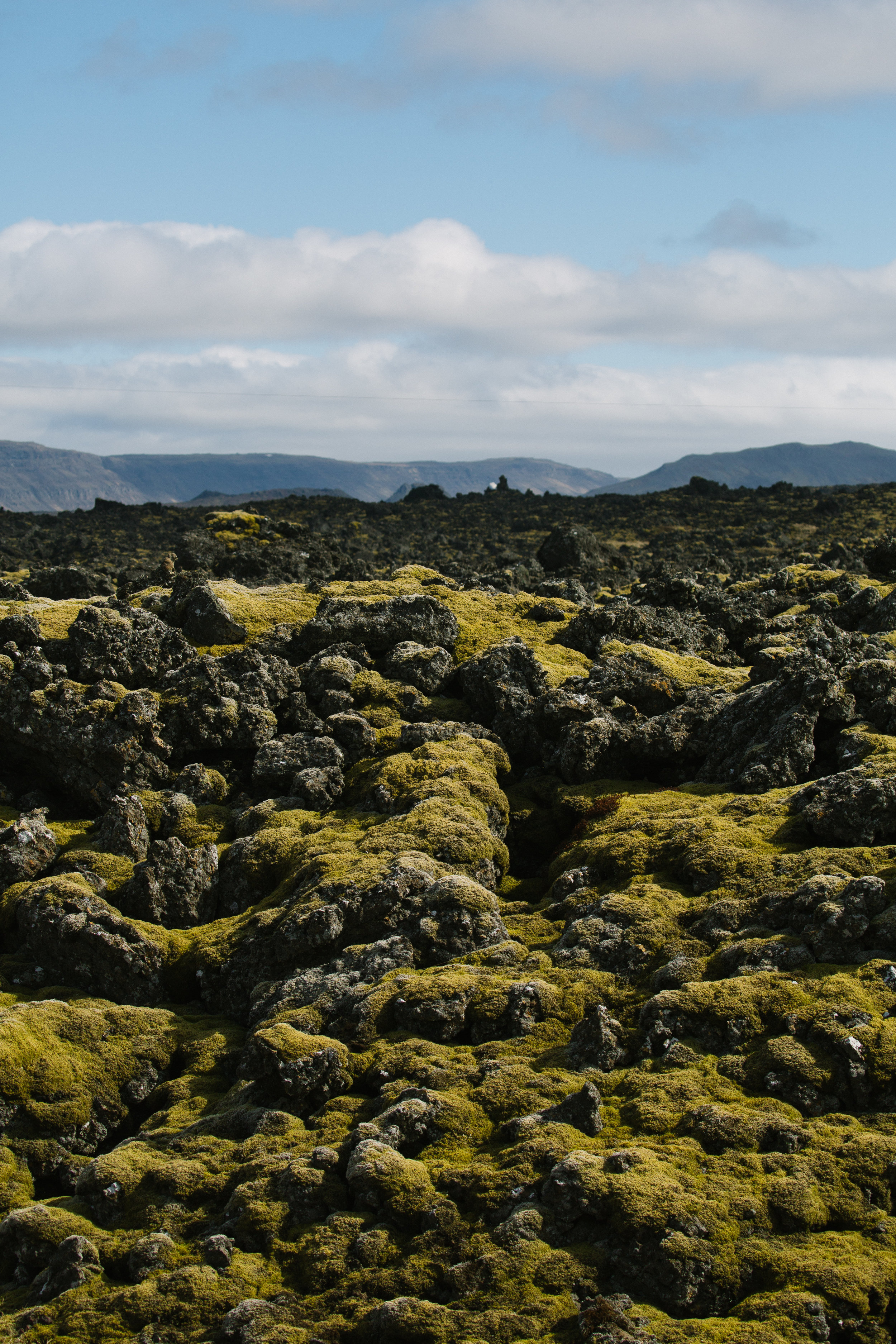 Soft mossy ground in Iceland