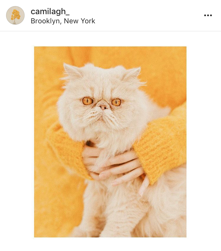 Camila Gutiérrez. It's not all cats. - Camila has a beautiful range of images with lots of soft blues and peachy pinks and while I really, really love this cat photo it's actually mostly portraits and lifestyle.
