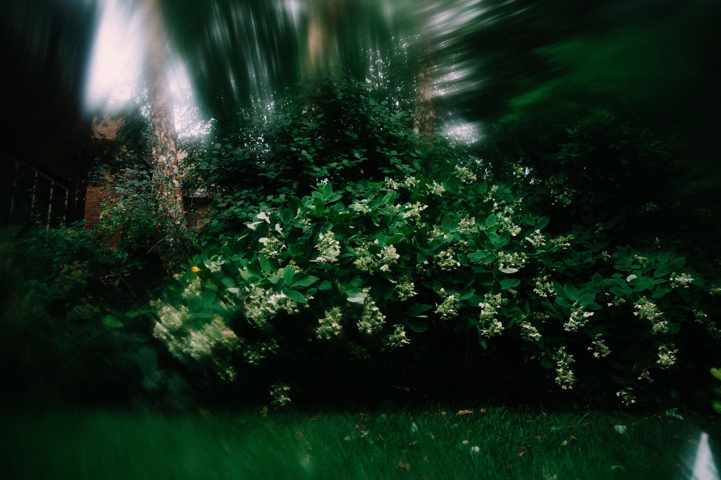 Vaseline photography example