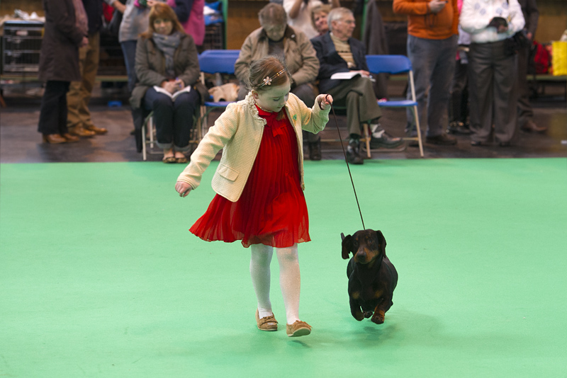 Crufts 2015 - Day 3