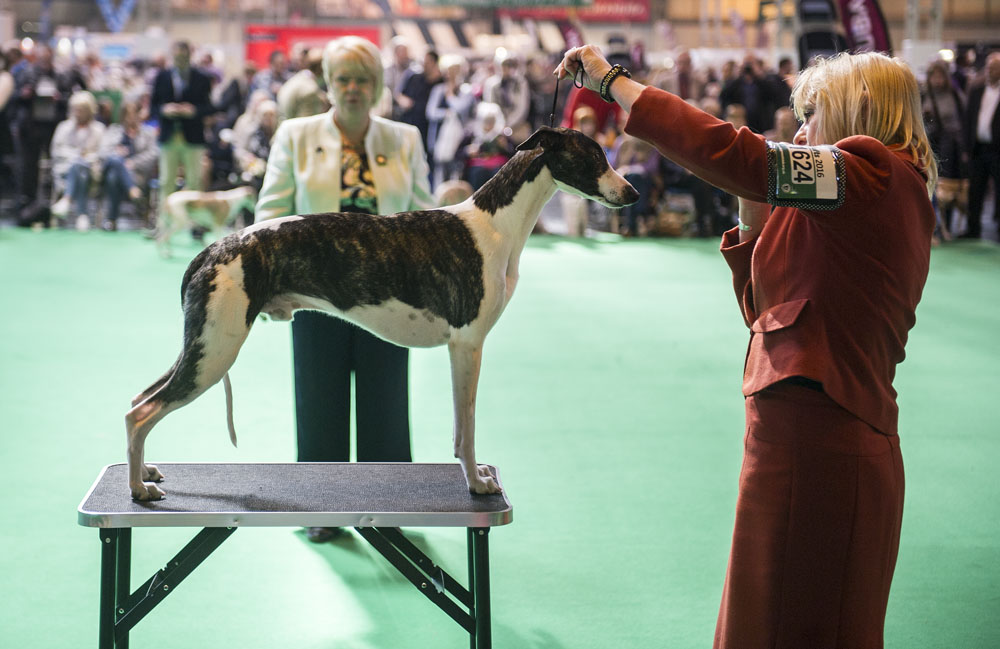 Crufts 2016 - Day 4