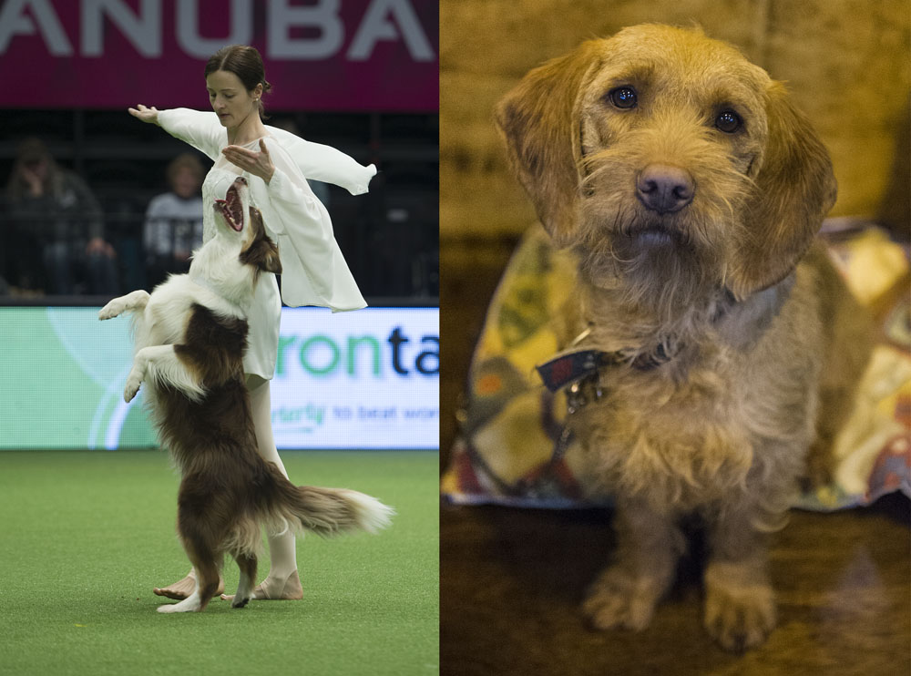 Crufts 2016 - Day 2
