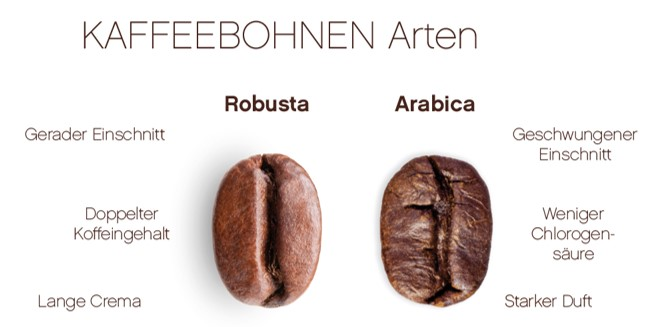 Kaffeebohnen Arten Robusta Arabica_Schönbergers.jpg