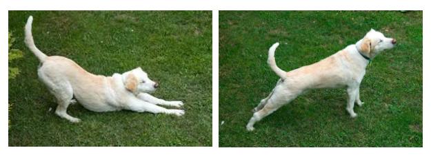 Downward dog (left) & upward dog (right)