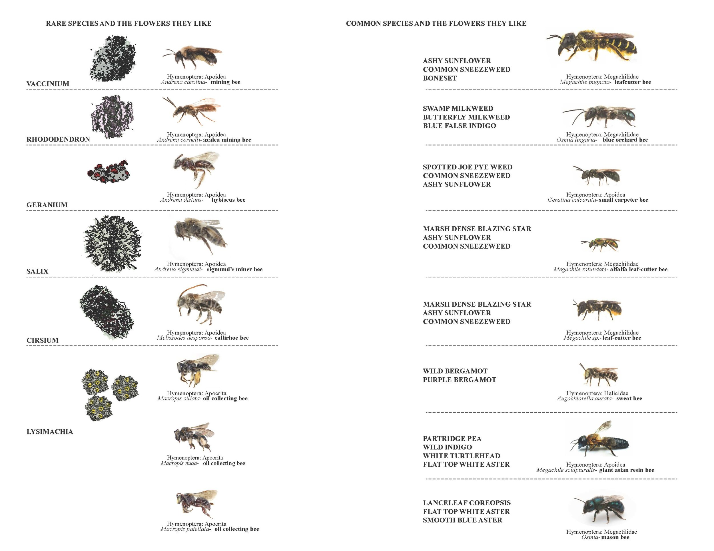 bee chart and plan (1)_Page_1.jpg