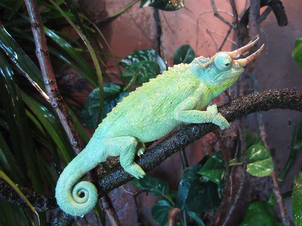 Chameleon Enclosure