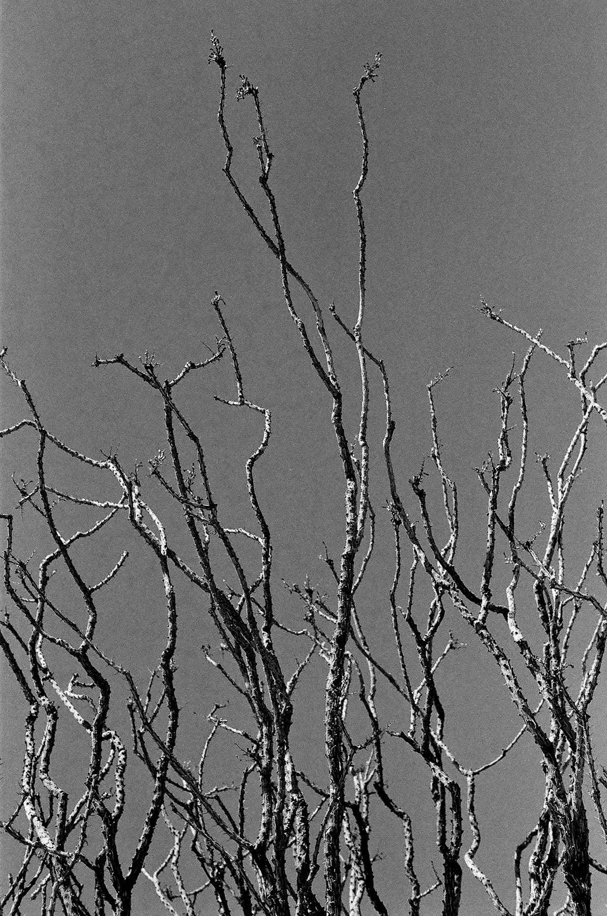 +Anza-Borrego-Cactus-04.jpg