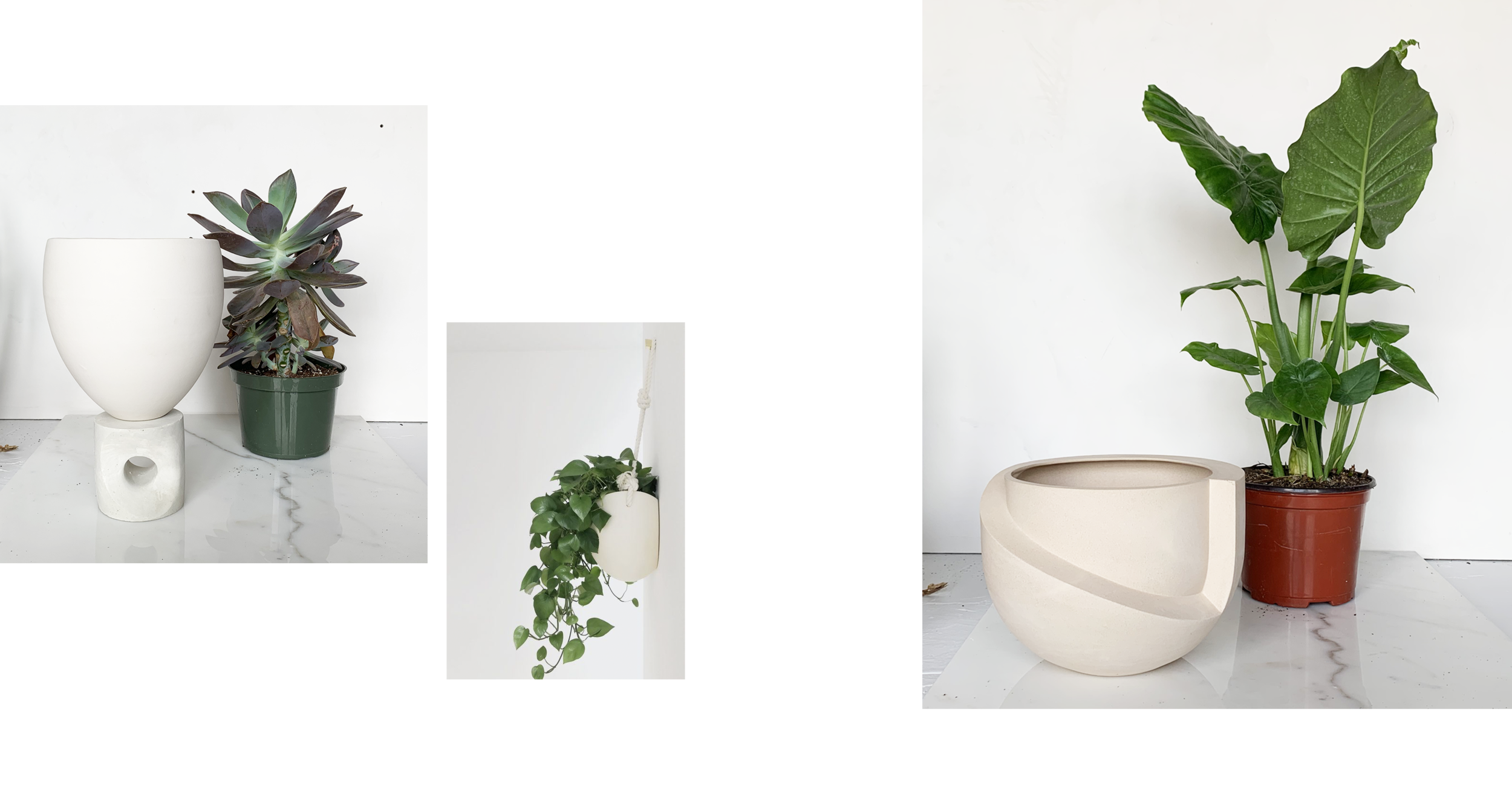 """6 INCH PLANTS   6 inch plants are perfect for  ELEVA ,  LARGE SPORA ,  BRASS SPORA  and  VAYU .  6"""" plants can be placed directly inside VAYU in their plastic pots. VAYU will act as its own drainage tray. See 'HOW TO PLANT WITH VAYU' above."""