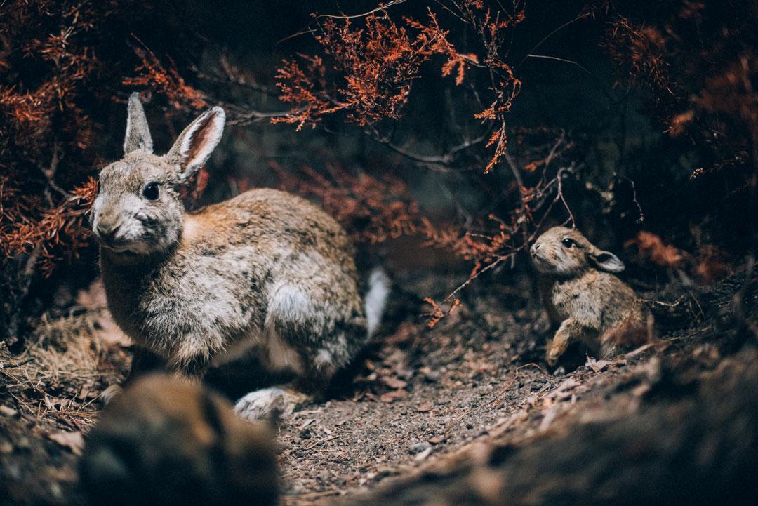 Naturhistoriska_JeanetteSeflin26.jpg