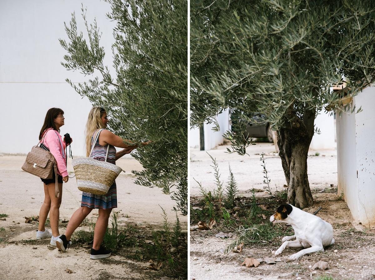 Marlene   och   Diana   inspekterar oliverna.