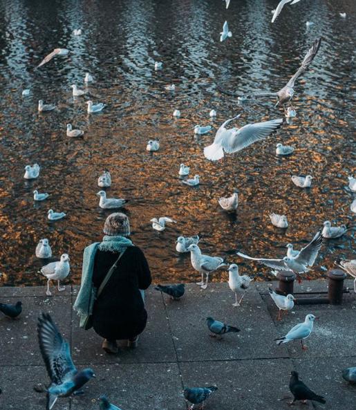Hamburg mata fåglar vatten