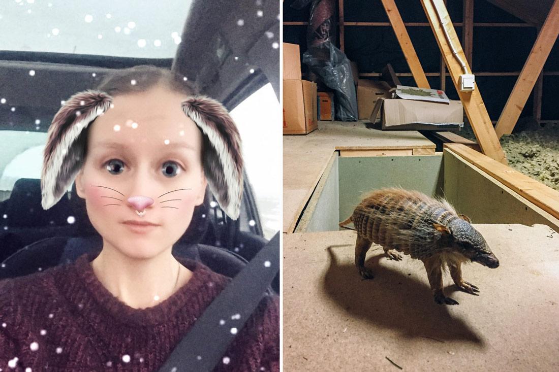 Snapchat filter, rensa vind hitta uppstoppat djur
