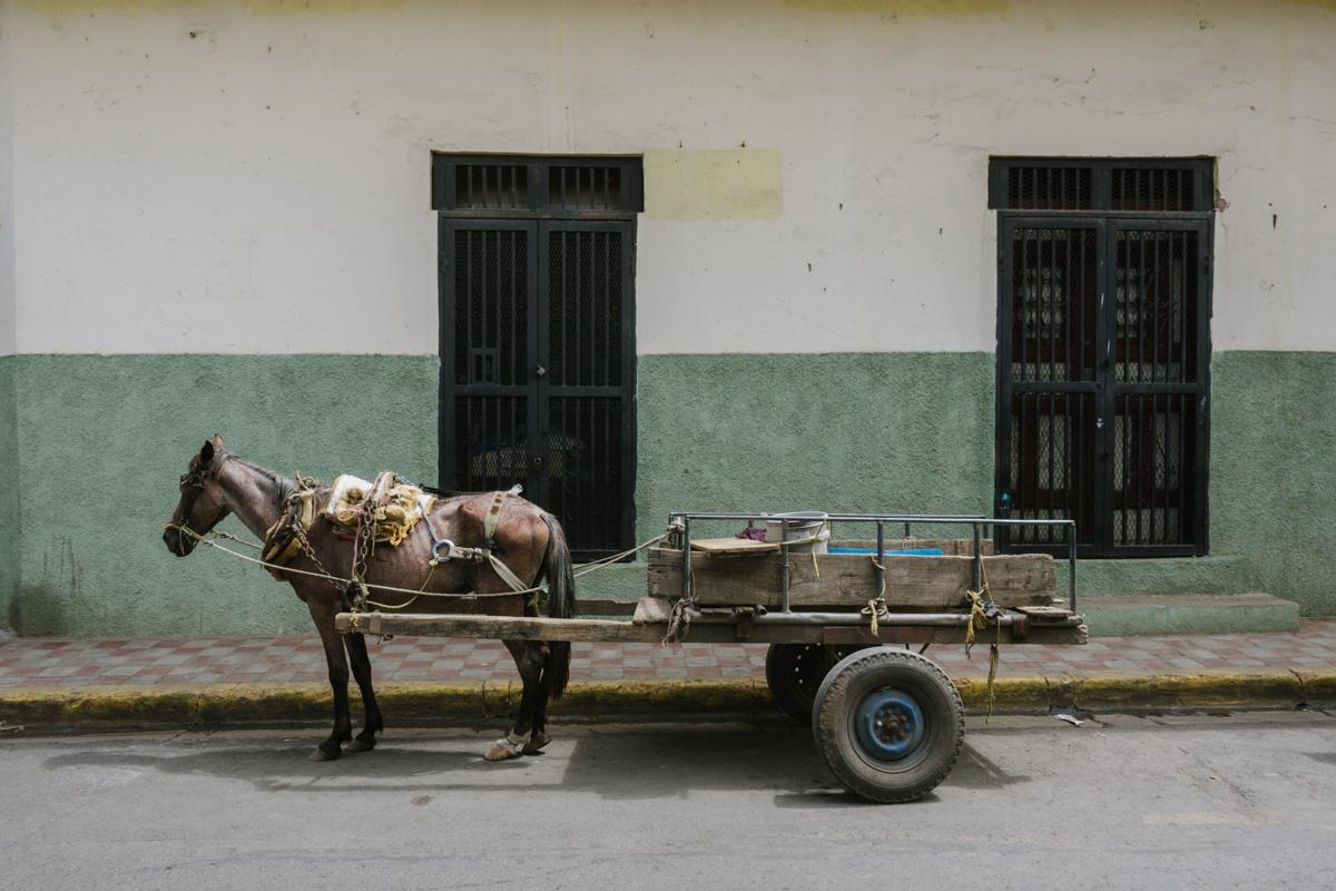 Häst med vagn i Granada Nicaragua