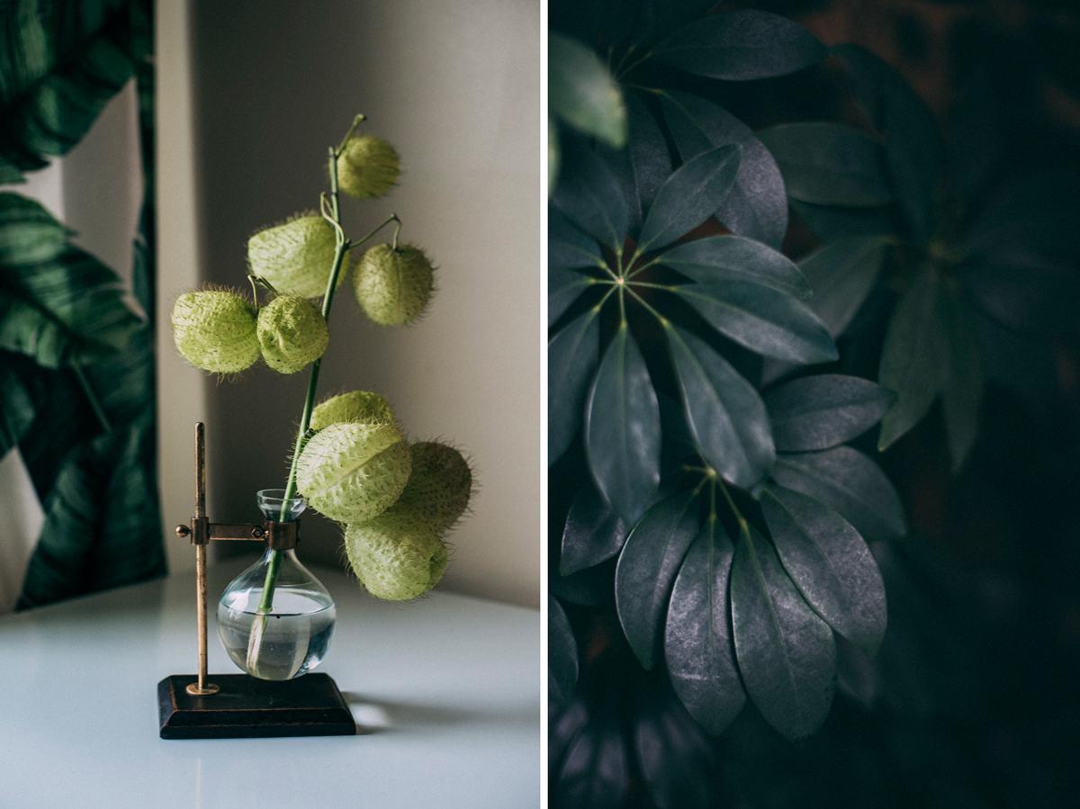 Växter fotograf stockholm