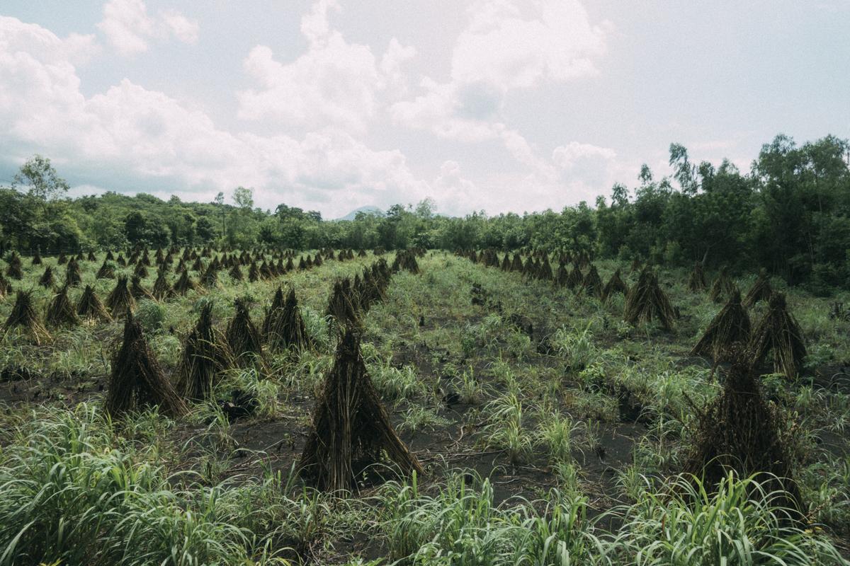 fält och natur på Nicaraguas landssbygd