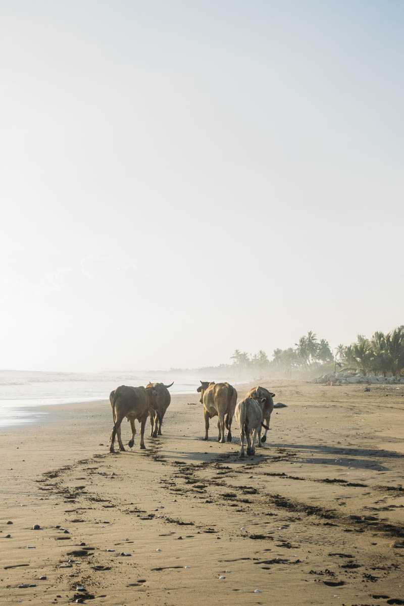strand i Jiquilillo Nicaragua