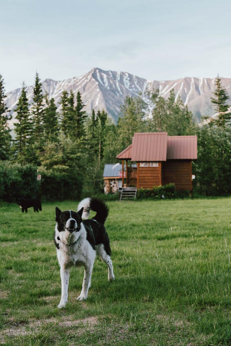 Fira midsommar i Alaska med softball i byn Mccarthy