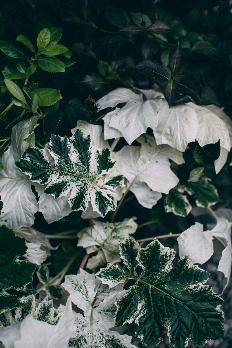 växter i seattle