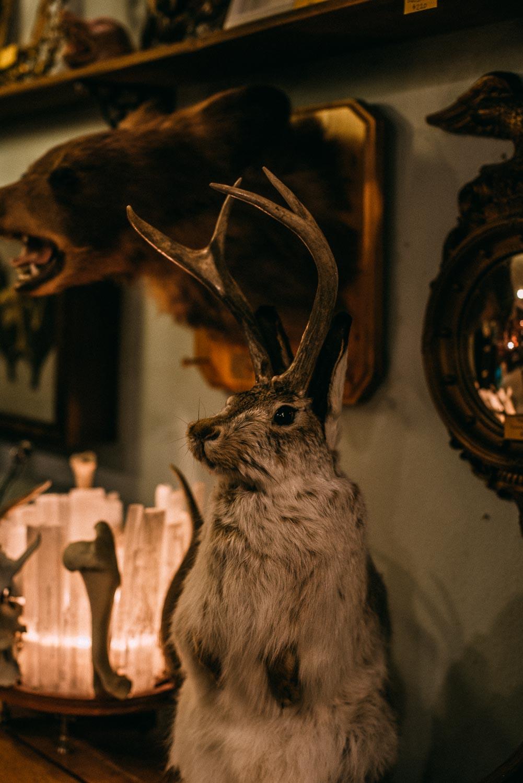 En shopping guide till dig som vill hitta annorlunda butiker att besöka i Seattle med en mix av second hand och nya föremål, affären Ballyhoo är en av dessa.