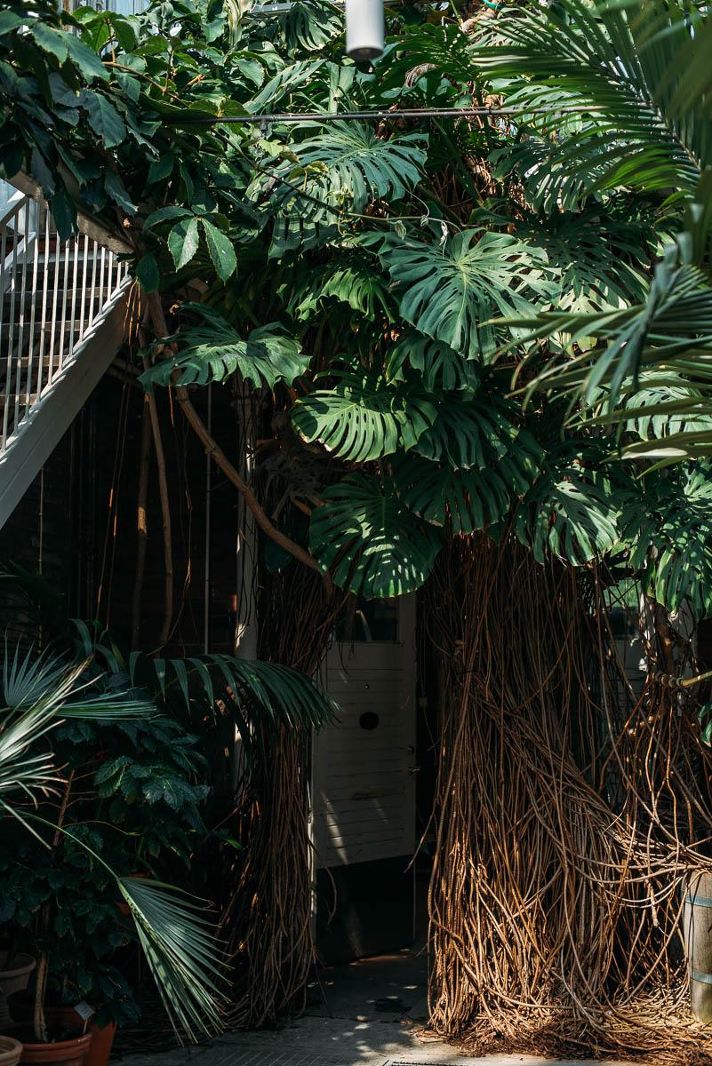 Palmhuset i Trädgårdsförening Göteborg