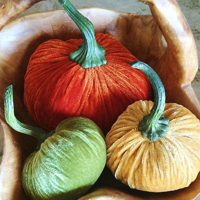 We'll be closed today, but wish you all a #HappyThanksgiving! #thanksgiving #pumpkin #pumpkins #decor #interiordesign #florals #floraldesign #flowers #beverlyhills #florist