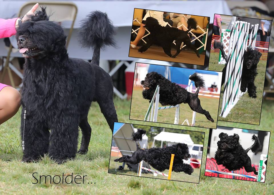 Smolder collage-agility.jpg