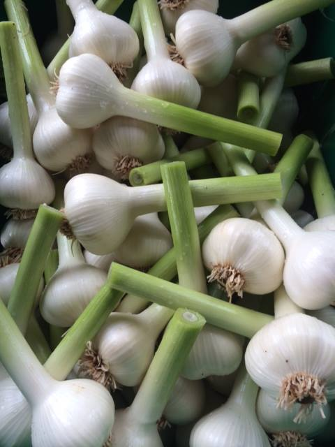 ckeaned garlic.jpg