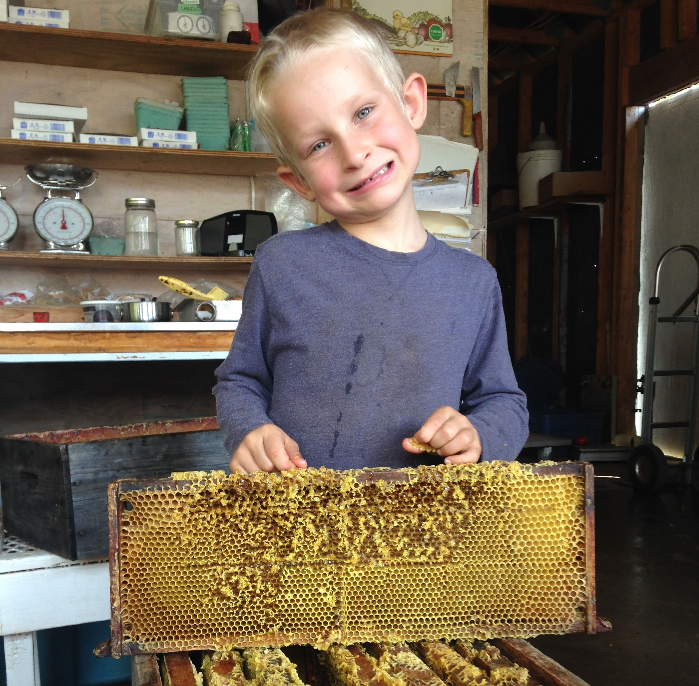 Keir Herbert-Harbottle is an excellent helper on the farm. His main areas of focus are honey production, melon sampling, and harvest supervision.