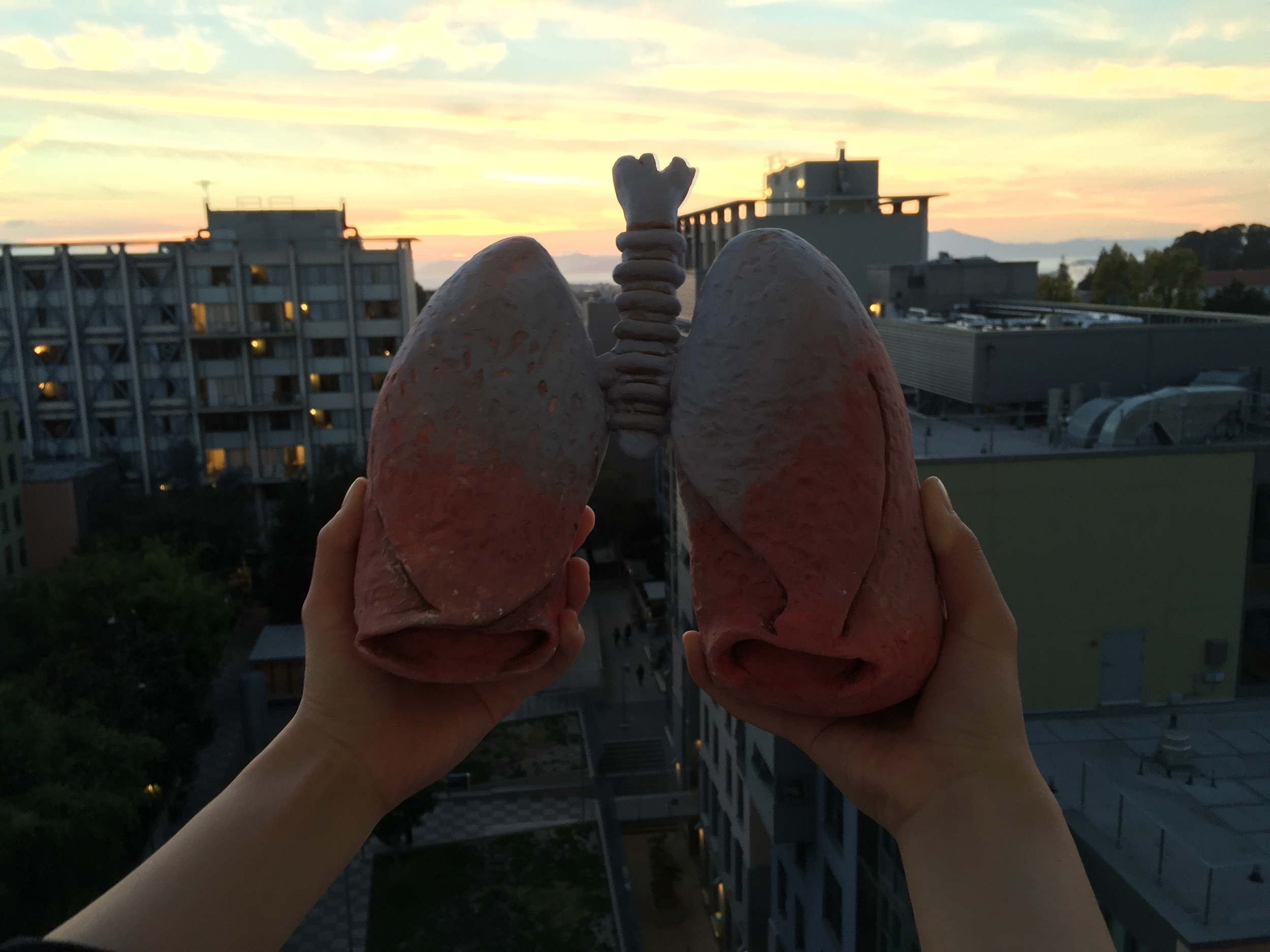 lisakim_lungs2.jpg
