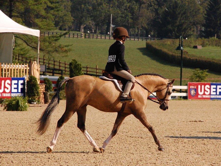 *Bronhuelog Armani at Pony Finals